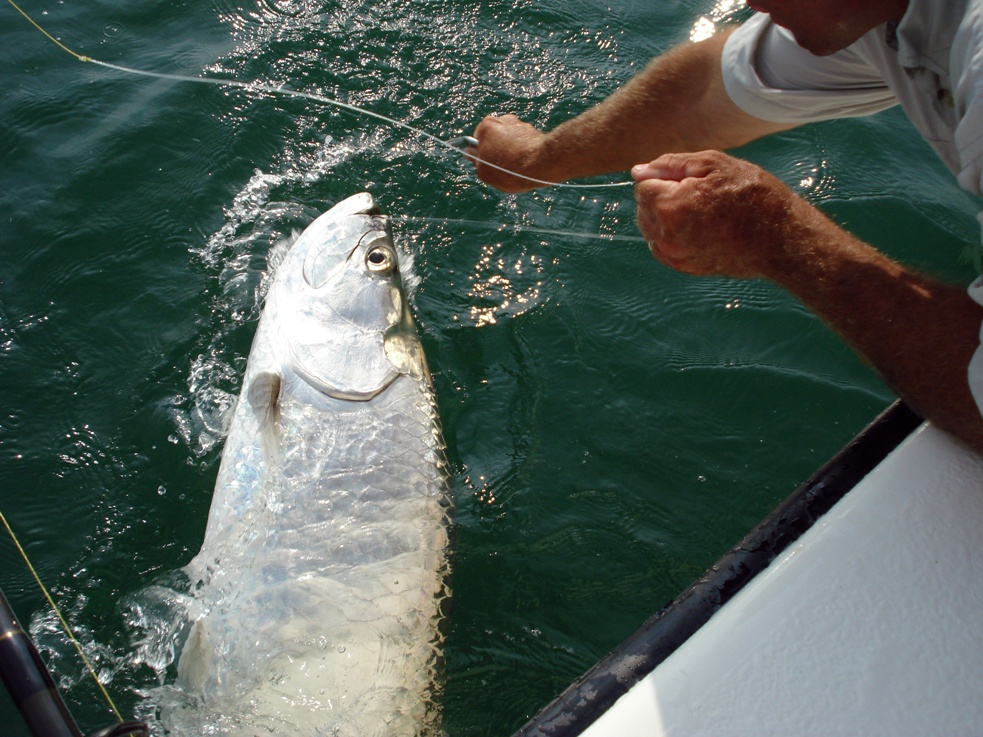 Tarpon-Fishing-Captain-Todd-Romine.jpg